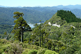 natural forest of new zealand